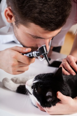 Possono ammalarsi i gatti per colpa della muffa?