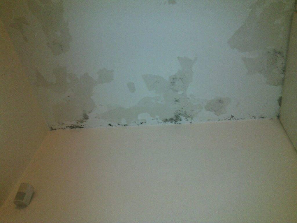 Effetti della candeggina su pareti attaccate da muffa - Scritte sulle pareti di casa ...