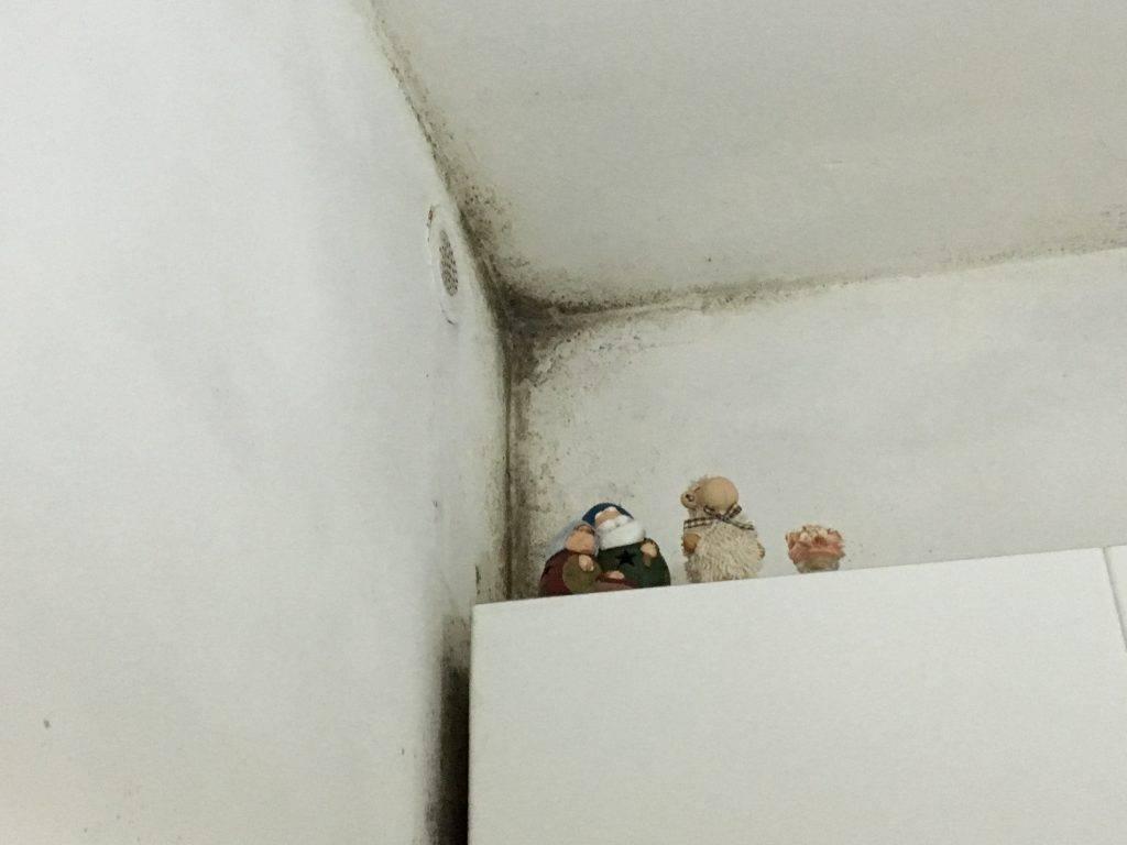Togliere Muffa Muro. Stunning Macchie Di Muffa In Casa Oltre Ad ...