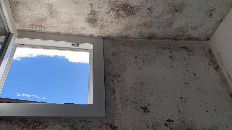 muffa sulle pareti