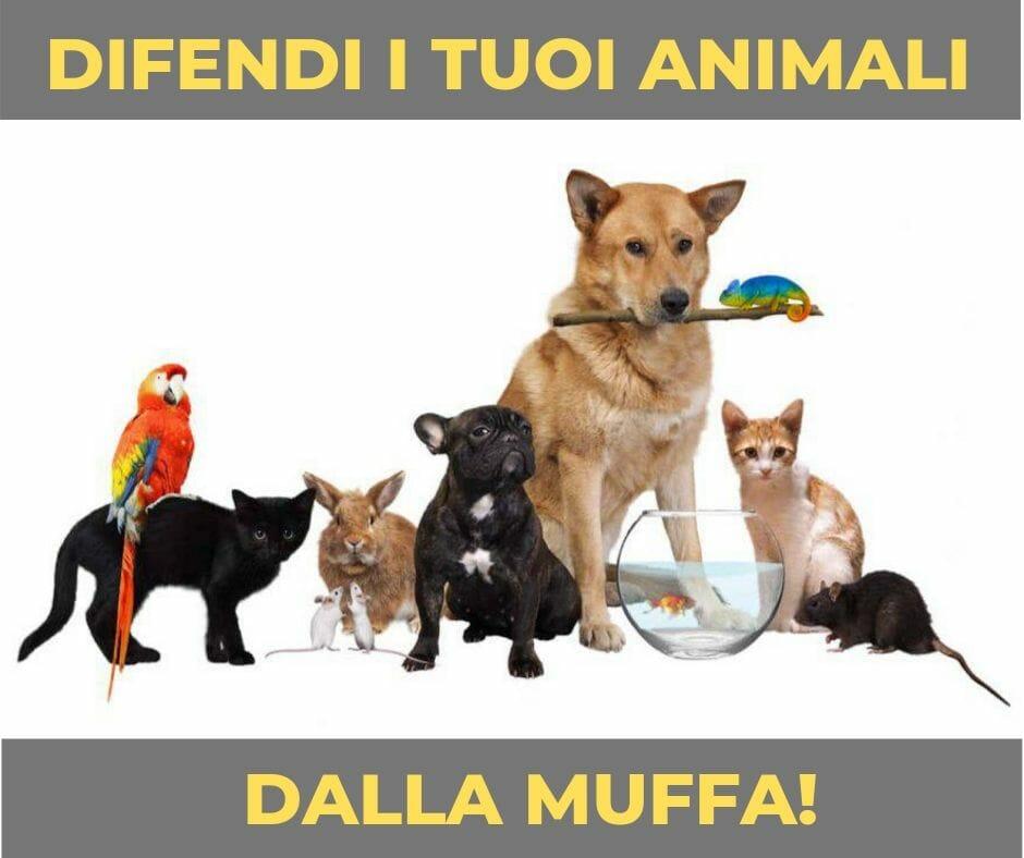 Muffa e Salute: La muffa è pericolosa per gli animali domestici?