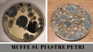 muffe in piastra Petri