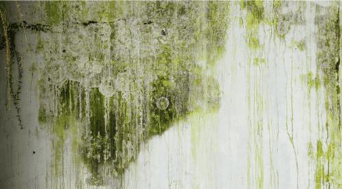 muffa verde