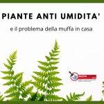 piante anti umidità